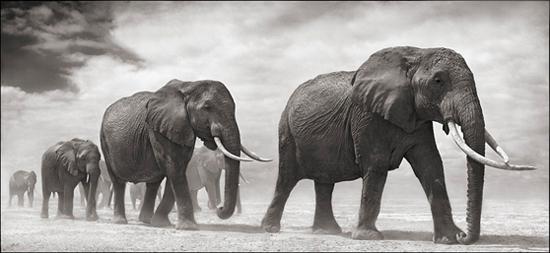 NB_Big Life Elephants